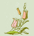 hand drawing tulips bunch vector image vector image