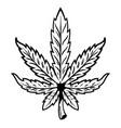 leaf marijuana vector image
