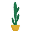 big cactus plant in pot with thorns houseplant vector image