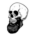 hand drawn of bearded skull design element for vector image vector image