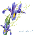 Irises drawing by watercolor vector image vector image
