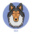 portrait of collie in style of flat vector image vector image
