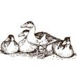 sketch wild ducks vector image