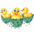 three little chicks hatching eggs vector image vector image