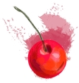 red cherry vector image
