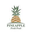 pineapple fruit image vector image