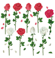 set flowers white and red roses isolated vector image vector image