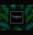 tropical exotic leaves summer frame banner vector image vector image