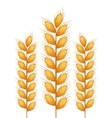 wreath spikes nature isolated icon vector image