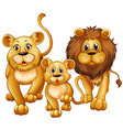 Lion on family with cute cub vector image vector image
