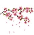 Sakura blossom Japanese cherry tree vector image vector image