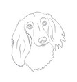 dog portrait dachshund lines vector image vector image
