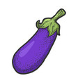 eggplant vegetable sketch vector image