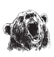 Hand sketch head bear vector image vector image
