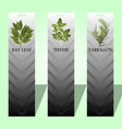 long label with spicy herbs vector image
