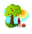 man gardener picking ripe apples in orchard icon vector image