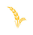 wheat agriculture graphic design template vector image vector image