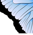abstraction Part of butterfly wing vector image
