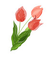 bouquet plants red flowers tulips with green vector image vector image