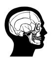 Human Head With Skull vector image