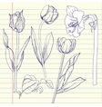 Notebook set with tulip and amaryllis vector image vector image