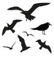 set - seagull silhouette on white vector image vector image