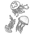 three beautiful decorative different jellyfish vector image