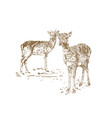 two young deer in sketch style hand drawn vector image