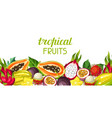 banner with exotic tropical fruits vector image vector image