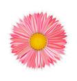 flower pink gerbera vector image