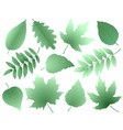 leaves and branches silhouettes set vector image