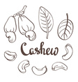 Cashew kernels and leaves vector image vector image