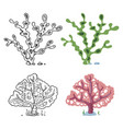 seaweeds coloring page with bright sample - coral vector image vector image