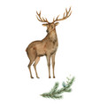 watercolor card with a deer and a fir vector image
