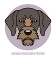 portrait of german wirehaired pointer vector image