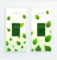 beautiful green leaves vertical banner card vector image