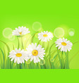 fresh spring juicy chamomile flowers and green vector image vector image