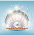 open beautiful shell with a precious pearl vector image