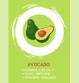 green half opened avocado on background vector image vector image
