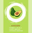 green half opened avocado on green background vector image