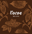 hand drawn cocoa beans card abstract cacao vector image