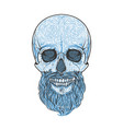 human skull with beard hand drawn vector image