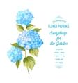 The Hortensia flower vector image vector image