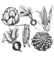 vegetable collection hand drawing vector image vector image