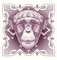 hand drawn portrait monkey isolated vector image vector image