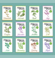 herbs and spices cards set hand drawn medicinal vector image vector image