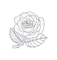 Rose Flower Monochrome Drawing For Coloring Book vector image vector image