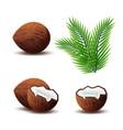 set coconut icon broken coconut and leaf vector image vector image