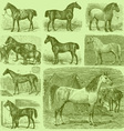 Set of 9 Engraved Horses vector image vector image