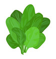 spinach leaves icon cartoon style vector image vector image